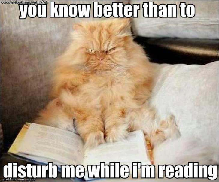 disturb me while reading