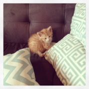 spike the kitten