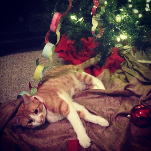 spike the kitten at Christams