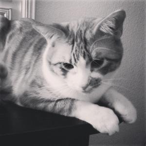 April 2014 portrait of Spike