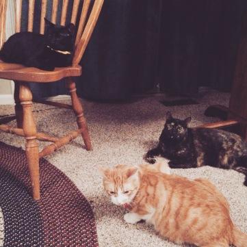 Marceline, Angel, and Spike